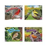 Backyard Birds : Backyard Birds - Lisa J Amstutz