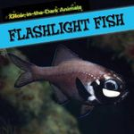 Flashlight Fish : Glow-In-The-Dark Animals - Caitie McAneney