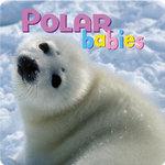 Polar Babies - Creative Publishing International