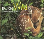 Born Wild in Shenandoah - Ann Simpson