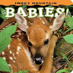 Smoky Mountain Babies : Pocket Guide - Ann Simpson
