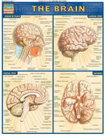 Brain : Reference Guide - BarCharts, Inc.