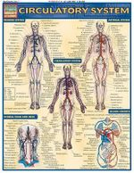 Circulatory System : Reference Guide - BarCharts, Inc.