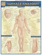 Surface Anatomy : Reference Guide - BarCharts, Inc.
