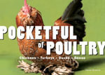 Pocketful of Poultry : Chickens, Turkeys, Ducks, Geese - Carol Ekarius