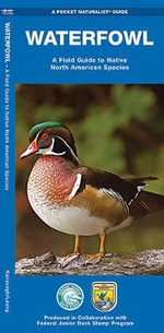 Waterfowl : A Field Guide to Native North American Species - James Kavanagh