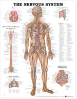The Nervous System Anatomical Chart : (Laminated)