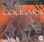Cougars : Eye to Eye With Big Cats - Jason Cooper