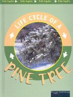 Life Cycle Of A Pine Tree : Life Cycles - Jason Cooper