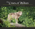 The Lives of Wolves : Coyotes and Foxes - Stan Tekiela
