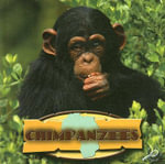 Chimpanzees : Amazing Apes - David Armentrout