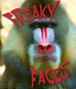 Freaky Faces : Weird and Wonderful Animals - David Armentrout