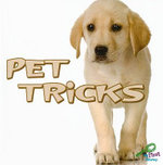 Pet Tricks : My First Discovery Library - Meg Greve