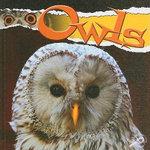 Owls : Raptors (Rourke Library) - Julie K Lundgren