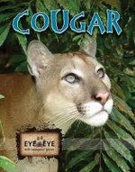 Cougars : Eye To Eye With Endangered Species - Cindy Rodriguez