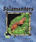 Salamanders : Salamanders - Julie Murray