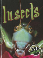 Insects : Eye to Eye with Animals - Don McCleese