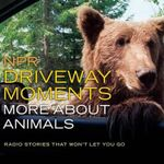 NPR Driveway Moments: More about Animals : Radio Stories That Won't Let You Go - Steve Inskeep