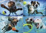 Underwater Dogs 2 : 1000 Piece Jigsaw Puzzle - Seth Casteel