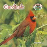 Cardinals : Backyard Safari - Wil Mara