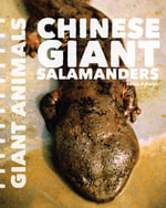 Chinese Giant Salamanders - Susan Schafer