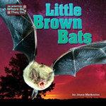 Little Brown Bats : Little Bits: In Winter, Where Do They Go? - Joyce L Markovics