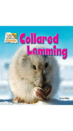 Collared Lemming - Dee Phillips