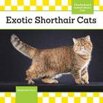 Exotic Shorthair Cats - Stephanie Finne