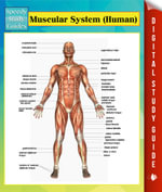 Muscular System (Human) Speedy Study Guides - Speedy Publishing