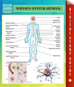 Nervous System (Human) Speedy Study Guides - Speedy Publishing
