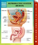 Reproductive System (Human) Speedy Study Guides - Speedy Publishing