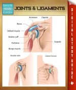 Joints & Ligaments : Speedy Study Guides - Speedy Publishing