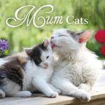 Mum Cats - Pan Macmillan