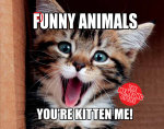 The Meme-Ing of Life : Punny Animals