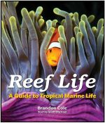 Reef Life : A Guide to Tropical Marine Life - Brandon Cole