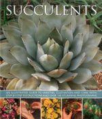 Succulents - Terry Hewitt