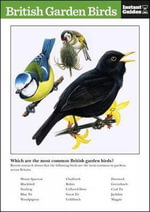 British Garden Birds : The Instant Guide - Instant Guides
