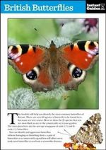 British Butterflies : The Instant Guide - Instant Guides