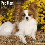 Papillon Calendar 2016 - Avonside Publishing Ltd.