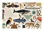 Animalium - Jenny Broom