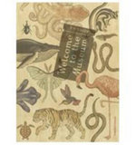 Welcome to the Museum : Animalium Collector's Edition (Limited Edition) - Jenny Broom