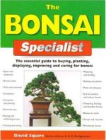 The Bonsai Specialist - David Squire