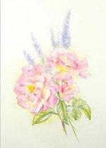 Peace Roses : Art Cards - Julie King