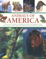 Animals of America : A Visual Encyclopedia of Amphibians, Reptiles and Mammals in the United States, Canada and South America, with over 350 Illustrations - Tom Jackson