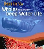 Sperm Whales and other Deep-Water Life : Under the Sea - Sally Morgan