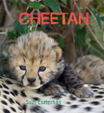 Cheetah : Eye of the Wild - Suzi Eszterhas