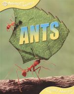 Ants : Animal Lives - Sally Morgan