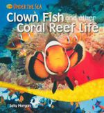Clown Fish and Other Coral Reef Life : Under the Sea - Sally Morgan