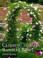 Climbing and Rambler Roses - David Austin