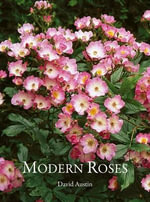 Modern, Bush and Shrub Roses - David Austin